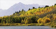 Fall colors at Grand Teton... so gorgeous! #nationalparks