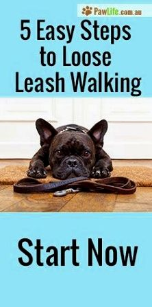 Dog Training Hacks Learning The Triggers Enables You To Handle