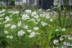 こころの庭のお花たち