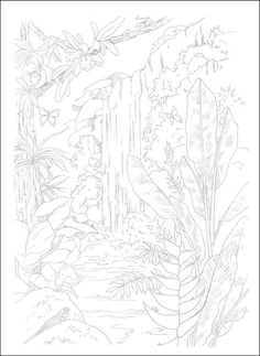 Welcome To Dover Publications Creative Haven Wild Animals ...
