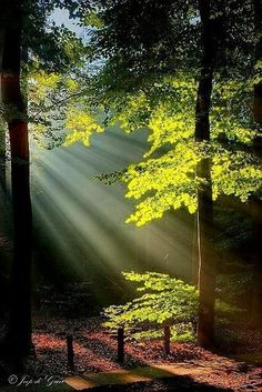 sunrise shing through the morning forest Beautiful World, Beautiful Places, Beautiful Pictures, Beautiful Forest, Beautiful Sunrise, Beautiful Morning, Foto Nature, Landscape Photography, Nature Photography