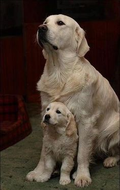 Parent and puppy