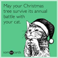 11 Christmas Quotes Your'e Gonna Love - World's largest collection of cat memes and other animals Christmas Quotes, Christmas Cats, Christmas Humor, Merry Christmas, Christmas Jingles, Christmas Cartoons, Christmas Wishes, Christmas Stuff, Christmas Time