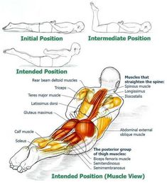 Office workers and anybody who tends tosit alot will find these exercises very helpful in alleviating problems and symptoms associated with prolonged sitting. If you are diagnosed with a spinal or back injury consult with your doctor if these exercises Fitness Workouts, Yoga Fitness, At Home Workouts, Health Fitness, Physical Fitness, Cardio Workouts, Health Club, Posture Exercises, Back Exercises