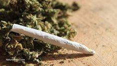 Medical marijuana legalization reduces painkiller overdose deaths