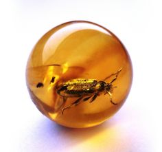 cc.. Baltic amber ball - very rare Cerambycidae - body 6 mm | (50 MYO) - Insect in amber . Insekt in Bernstein - © Anders Leth Damgaard - www.amber-inclusions.dk
