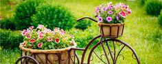 Tendências para apostar no seu jardim em 2016 - Para começar o ano de 2016 com o pé direito, nada melhor que ficar por dentro das principais tendências em jardinagem, não é mesmo? Como ainda estamos nos primeiros dias do ano novo, esse é o período ideal para planejar eventuais reformas e melhorias no espaço verde da casa. O primeiro post do bl... - http://www.aduboverde.com/ecoblog/2016/01/04/tendencias-para-apostar-no-seu-jardim-em-2016/