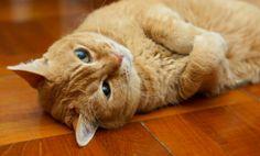Hilarious Cat Afraid of Peas (Video)