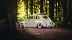 https://flic.kr/p/vAtrV5 | Beetle | Second photo of this beautiful Beetle, and the last photo before I go to Austria tomorrow! Hope you like it!