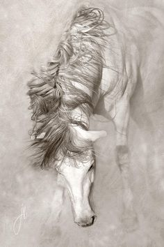 Mane Dreams Digital Art
