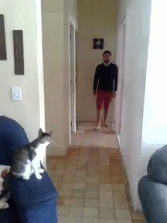 Ma Kitten : funny