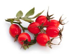 rosehip oil - Google Search
