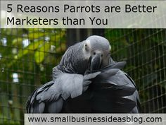 5 Reasons Parrots are Better Marketers than You