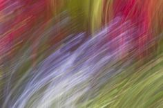 """abstracted garden 202""  abstract view of a garden in bloom. Modern art for Interior Design  angelacameron.com"