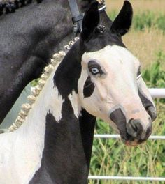 Will be a wonderful horse