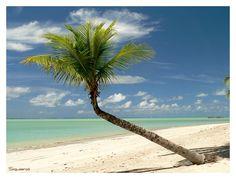 Conheça Maragogi com a Potência Viagens e Turismo.  http://www.sempreviajar.com.br/brasil/maceio-tem-as-mais-belas-praias-do-brasil-e-muito-mais/index.php