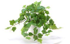 フェイクグリーン/観葉植物のグレープアイビー 造花ドットコム zouka.com