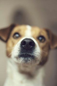 Jack Russell - looks like a closeup of my baby's face.  ;)