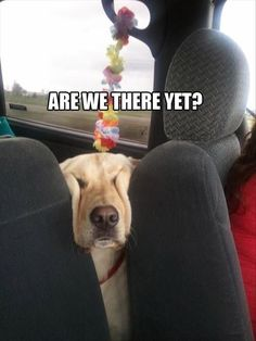 Are we there yet? Squished puppy!