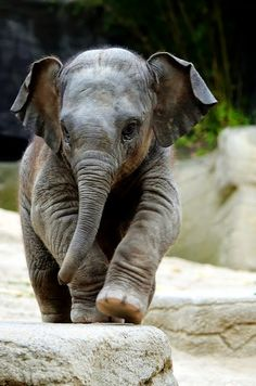 Baby Elephant ~ Travels Spot