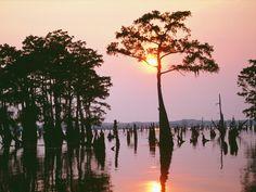 Les bayous de Louisiane...