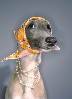Jackie O doggies