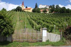 berühmte Lage Kirchleiten / famous vineyard Kirchleiten Vineyard, Outdoor, Outdoors, Vine Yard, Vineyard Vines, Outdoor Games, The Great Outdoors