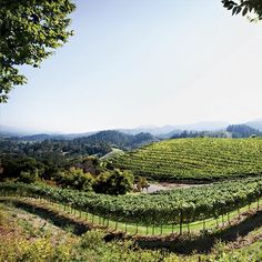 Best Napa Valley Wineries to Visit according to Food Wine