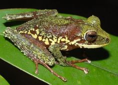 New Species Discovered: Conservation International Researchers Find Hundreds Of Undocumented Creatures In Papua New Guinea