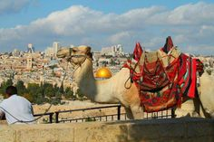 Man and camel, overlooking the Holy city.