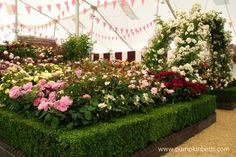 The scent inside the Festival of Roses Marquee at the RHS Hampton Court Palace Flower Show is amazing!  Everywhere is beautifully perfumed with the fragrance of tea roses, it's truly wonderful!