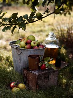 apple picking and making apple cider. 20 Reasons To Love Autumn via marinagiller.com