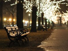 park bench, central park, christmas lights, cold night, and damp walk = to do. Flash Studio, Beautiful Places, Beautiful Pictures, Simply Beautiful, Lovely Things, Wonderful Places, Led Fairy Lights, Twinkle Lights, Twinkle Twinkle
