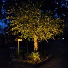 Great Tree Uplighting With Volt S In Ground Well Lights Outdoor Trees Lighting