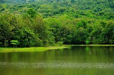 Green Leaf  -