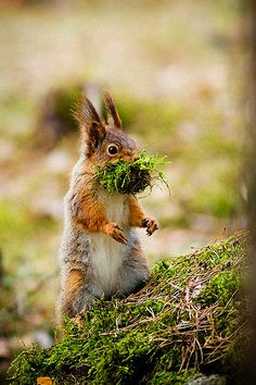 "Squirrel: ""I can't speak with my mouth full!"" (By: Magnus Sandström.)"