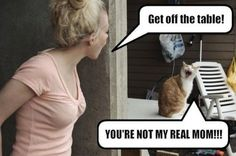 funny cats, humor, You're not my real mom Funny Cats, Funny Animals, Cute Animals, Silly Cats, Stupid Cat, Weird Pets, Dumb Cats, Funniest Animals, Animal Fun