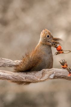 squirrel look up by Geert Weggen