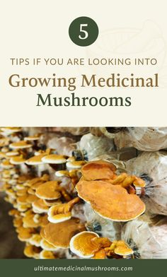 Growing mushrooms indoors is a great way to earn profit for doing something fun and exciting. Not only do mushrooms fill our bellies with a nutritious meat substitute, but they also have heaping amounts of health benefits that make some mushroom types great for medicinal purposes. Here are 5 tips on how you can grow medicinal mushrooms at home and eventually start your own profitable mushroom farm. | Discover more about medicinal mushrooms at ultimatemedicinalmushrooms.com #growingmushrooms Chanterelle Mushroom Recipes, Mushroom Risotto, Growing Mushrooms Indoors, Mushroom Benefits, Poisonous Mushrooms, Meat Substitutes, Portobello, Learn To Cook, New Recipes