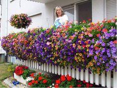 12 x echte tiroler h nge geranien kaufen balkon und badezimmer neu gestalten. Black Bedroom Furniture Sets. Home Design Ideas