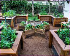 A fencedin raised bed garden area can help protect your plants