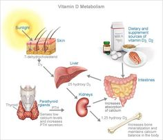 The body must first metabolize/convert Vitamin D effectively to sustain bone strength and overall health.
