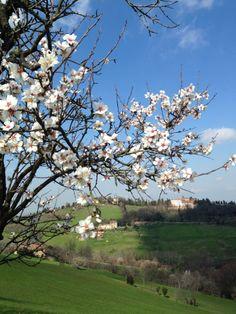 Bologna, dai pressi di Villa Ghigi