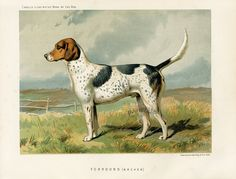 Dog Prints 1890, from The Illustrated Book of the Dog, chemolithograph