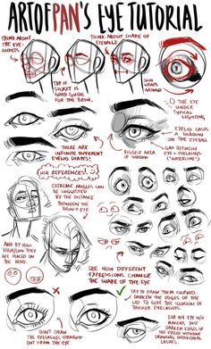AnatoRef | Eyes Tutorials Top Image Row 2: Left, Right Row 3:...