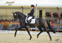 Sondheim (Rohdiamont x Sandro Hit) The Oldenburg Horse Breeders' Society | OH | Stallion Directory