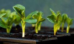 Why lights are the best grow lights for seedlings Indoor Plants, Wildlife Gardening, Seedlings, Plants, Best Grow Lights, Organic Gardening, Gardening Blog, Educational Garden, Growing Vegetables