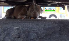 Chance's video is READY!!! Rescues like this one can be extremely dangerous!!! Please DO NOT try this on a stray dog (even if you really want to help a stray dog). The results of a mistake here can be deadly.