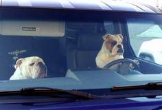 I tell ya Martha..I hate traffic jams!