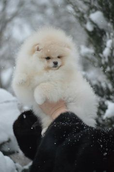 Behold the Snowball